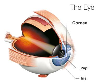 Eye Trauma in a 8 yr old treated successfully at AEHI eye hospital in Navi Mumbai