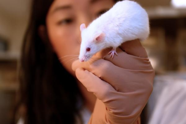 Researchers Give Sight to Blind Mice